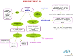 MICRONUTRIENTI 1b
