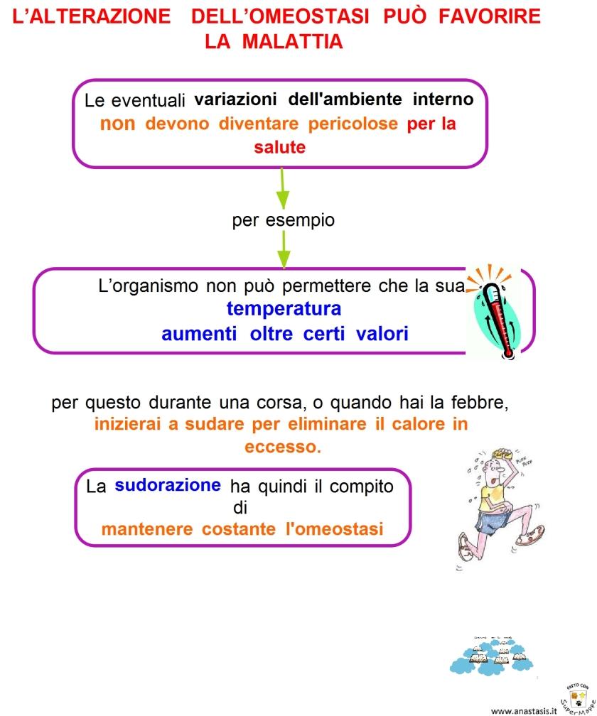 6-10-lalterazione-dellomeostasi-puo-favorire-la-malattia