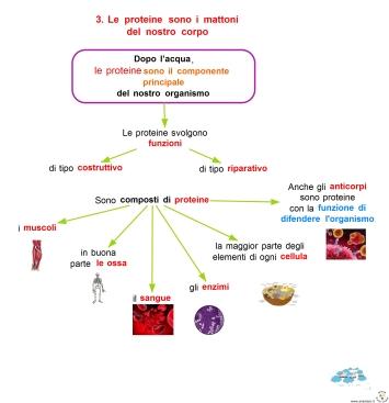 11-6-le-proteine-sono-i-mattoni-del-nostro-corpo
