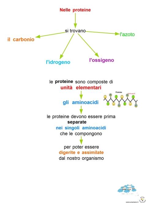 11-7-nelle-proteine