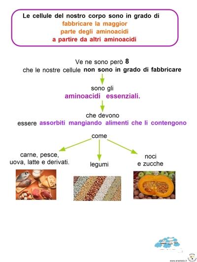 11-8-le-cellule-del-nostro-corpo-sono-in-grado-di-fabbricare-la-maggior-parte-degli-aminoacidi-a-partire-da-altri-aminoacidi