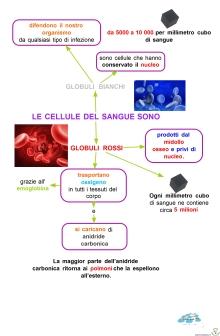 7-26-globuli-rossi-e-globuli-bianch
