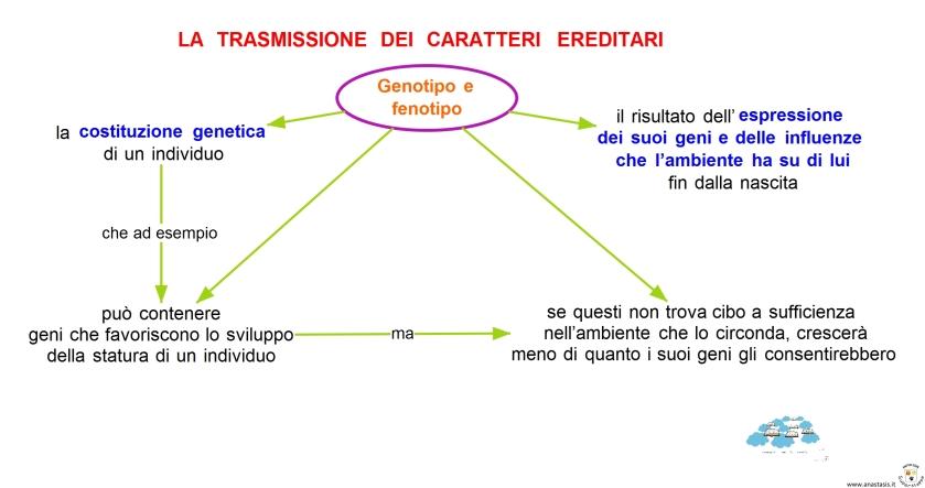 Genotipo e fenotipo.jpg