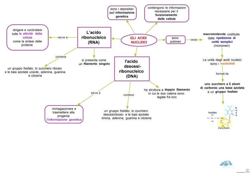 gli-acidi-nucleici
